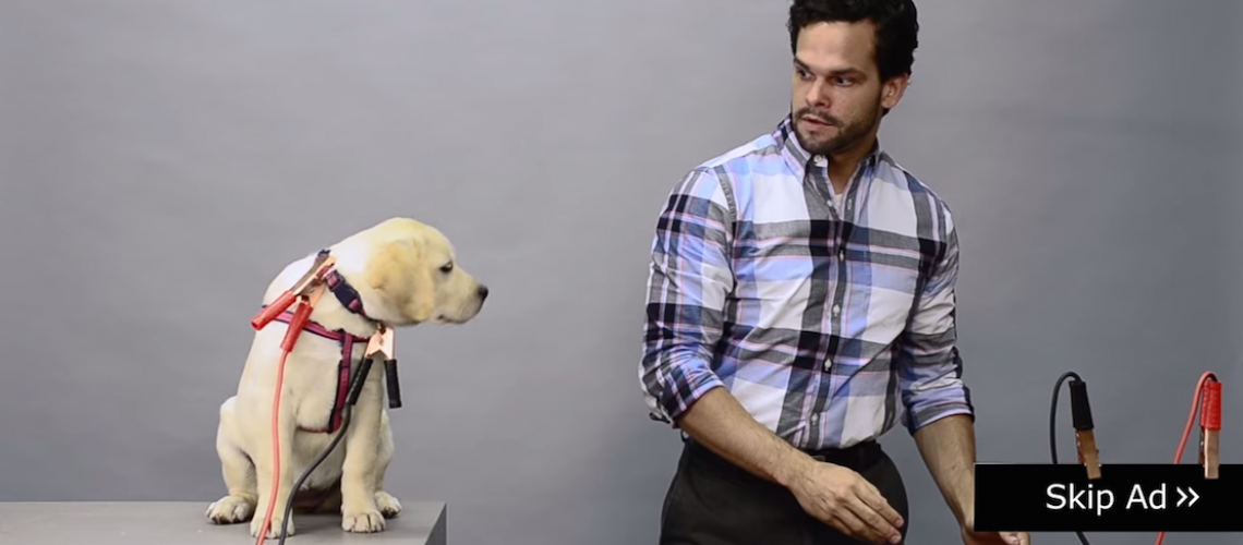 Save-Puppy-YouTube-Ad
